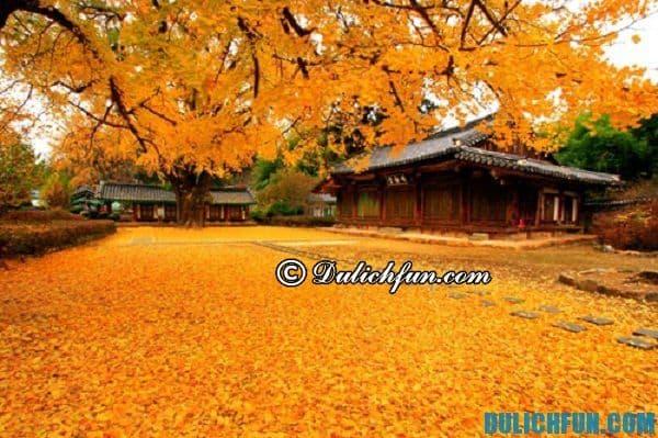 Điểm du lịch đẹp nhất ở Hàn Quốc vào mùa Thu. Du lịch Hàn Quốc vào mùa Thu đi đâu chụp ảnh, ngắm cảnh