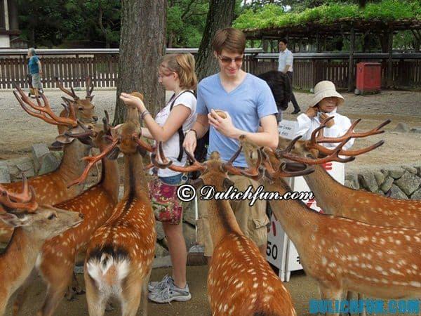 Du lịch Nara nên đi đâu? Các điểm tham quan không thể bỏ qua ở Nara, Nhật Bản