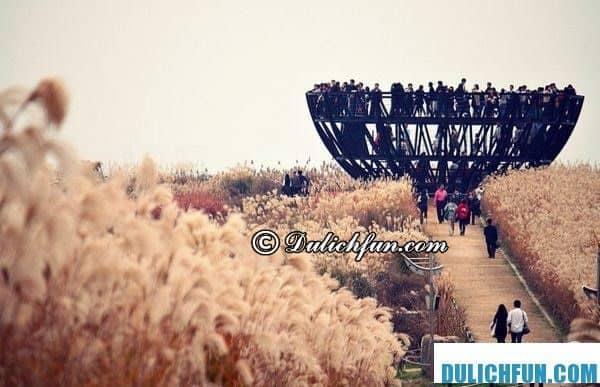 Du lịch Hàn Quốc vào mùa thu vui chơi ở đâu? Những địa điểm ngắm mùa thu lá vàng tại Seoul, Hàn Quốc – Công viên Haneul