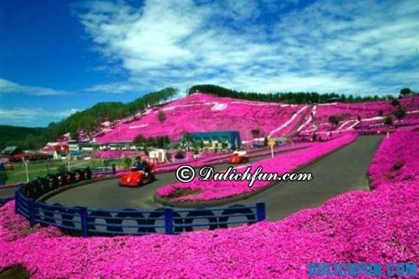 Kinh nghiệm du lịch Hokkaido. Du lịch Hokkaido nên đi đâu? Địa điểm vui chơi, ngắm cảnh đẹp, nổi tiếng ở Hokkaido