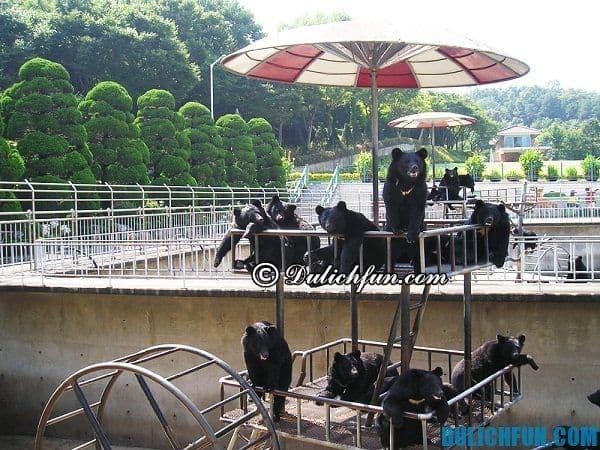 Du lịch hàn Quốc hè nên đi đâu? Các điểm du lịch mùa hè ở Hàn Quốc đẹp