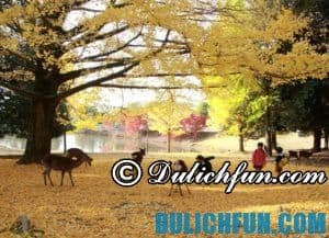 Những điểm tham quan đẹp ở Nara, Nhật Bản được yêu thích