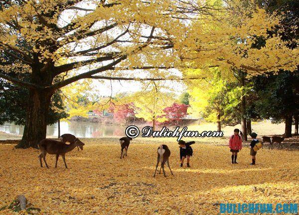 Nên tới Nara vào thời gian nào? Thời điểm thích hợp nhất để du lịch Nara. Kinh nghiệm du lịch Nara, Nhật Bản