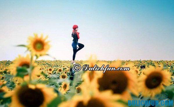 Kinh nghiệm du lịch vườn hoa hướng dương Nghĩa Đàn, Nghệ An: Tham quan, khám phá, du lịch, check in tại vườn hoa hướng dương ở Nghĩa Đàn