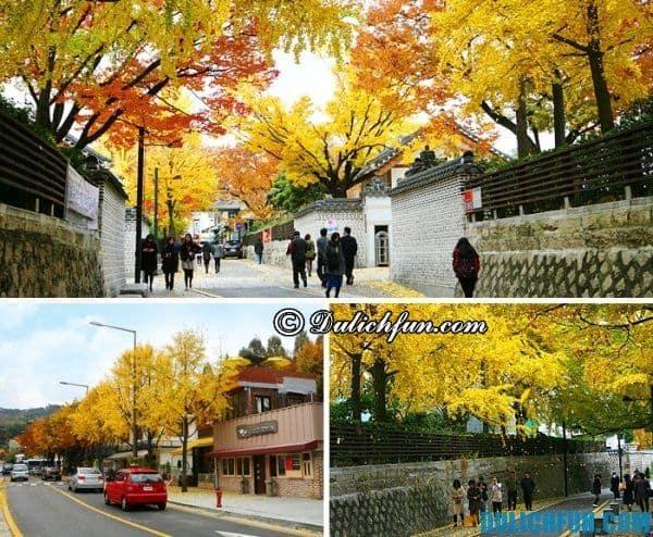 Những địa điểm ngắm mùa thu lá vàng ở Hàn Quốc. Du lịch Hàn Quốc vào mùa Thu