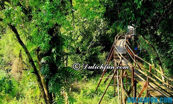 Những con đường thú vị khi du lịch vườn quốc gia Nam Cát Tiên. Kinh nghiệm du lịch vườn quốc gia Nam Cát Tiên lý thú