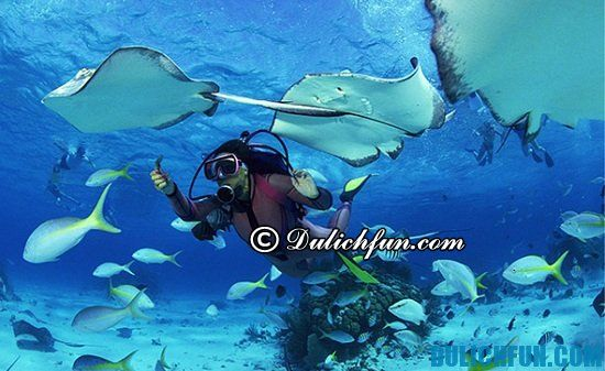 Manta Point, địa điểm tham quan, du lịch đẹp, thú vị ở Maldives bạn nhất định phải tới