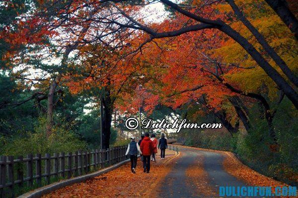 Những điểm du lịch nổi tiếng ở Hàn Quốc vào mùa Thu. Du lịch Hàn Quốc vào mùa Thu có gì hay?