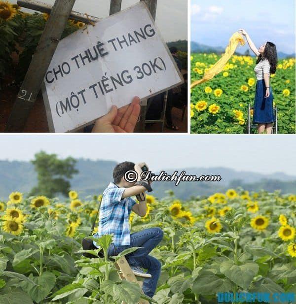 Một số điều cần lưu ý khi đến với cánh đồng hoa: Chi phí và giá vé chụp ảnh ở vườn hoa hướng dương Nghĩa Đàn, Nghệ An