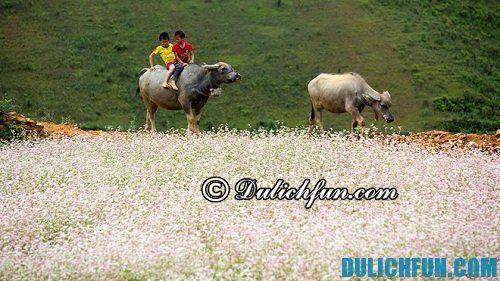 Những hoạt động du lịch thú vị ở Si Ma Cai: Địa điểm du lịch nổi tiếng ở Si Ma Cai
