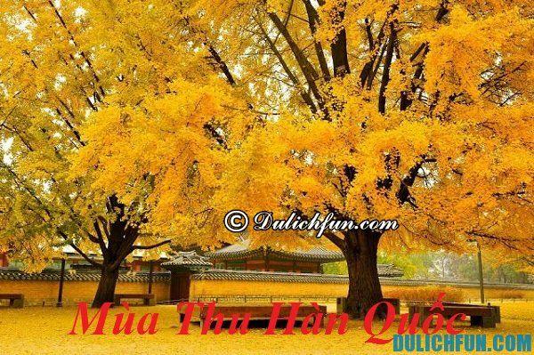 Du lịch Hàn Quốc mùa Thu có gì hấp dẫn? Những địa điểm du lịch nổi tiếng ở Hàn Quốc vào mùa thu