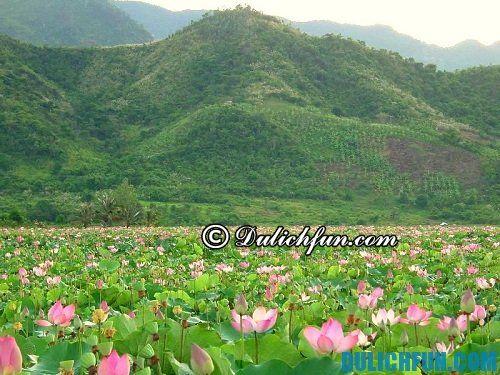 Hướng dẫn du lịch hồ Quan Sơn: Thời điểm đẹp nhất để du lịch hồ Quan Sơn