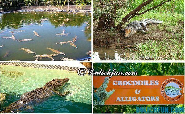 Công viên Crocodylus, địa điểm vui chơi hấp dẫn, thú vị ở Darwin, những điểm vui chơi nổi tiếng ở Darwin
