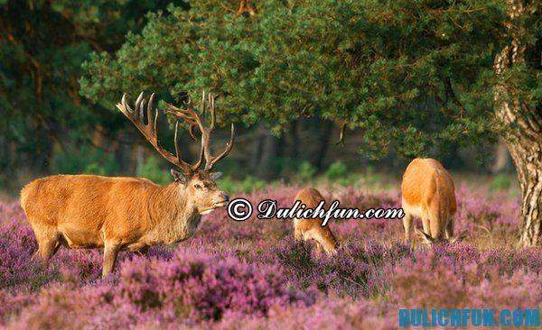 Công viên ở Hà Lan. Địa điểm du lịch đẹp, hấp dẫn nhất ở Hà Lan. Du lịch Hà Lan nên đi đâu chơi?