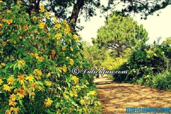 Các cung đường ngắm hoa dã quỳ đẹp nổi tiếng ở Đà Lạt: Địa điểm và nơi ngắm hoa dã quỳ đẹp nhất Đà Lạt