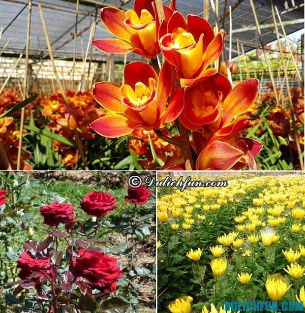 Những trải nghiệm du lịch thú vị ở nhà vườn Đà Lạt, địa chỉ các nhà vườn đẹp, nổi tiếng ở Đà Lạt