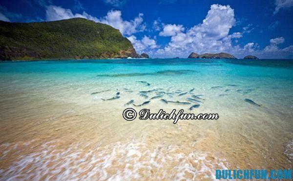 Lord Howe hòn đảo tự nhiên đẹp nhất ở Úc. Danh sách những hòn đảo đẹp, hấp dẫn ở châu Úc