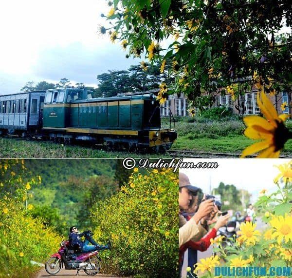 Phương tiện, cách thức đi ngắm hoa dã quỳ ở Đà Lạt: Địa điểm chụp ảnh, ngắm hoa dã quỳ đẹp nhất Đà Lạt
