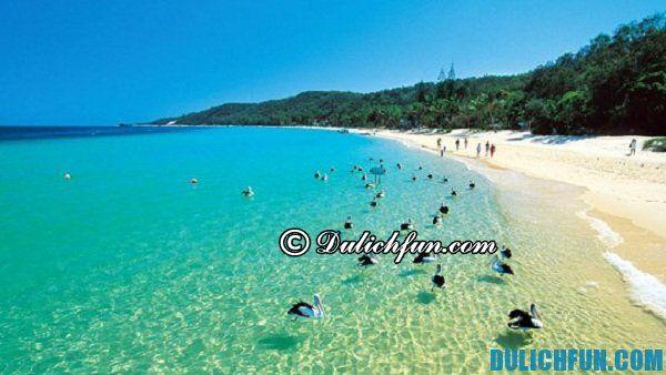 Vịnh Moreton, địa điểm du lịch đẹp, hấp dẫn ở Brisbane. Địa điểm du lịch đẹp, nổi tiếng nhất ở Brisbane