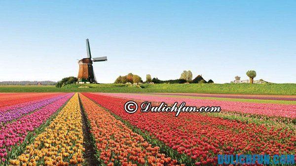 Vườn hoa Keukenhof, địa điểm du lịch đẹp nhất ở Hà Lan. Những địa điểm du lịch đẹp, nổi tiếng ở Hà Lan