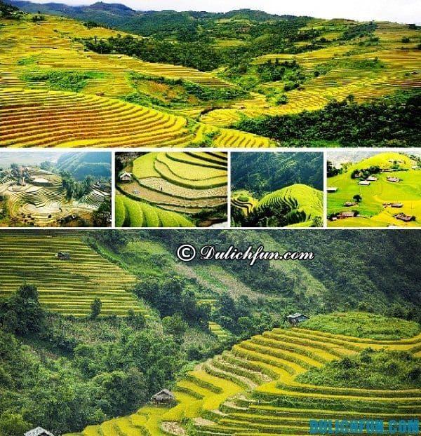 Địa điểm ngắm ruộng bậc thang, ngắm lúa chín đẹp nhất ở Hoàng Su Phì. Kinh nghiệm, hướng dẫn, lịch trình du lịch Hoàng Su Phì