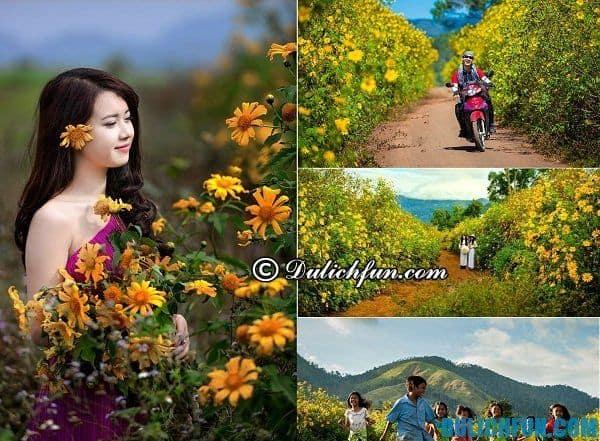 Kinh nghiệm ngắm hoa dã quỳ Đà Lạt: hoa dã quỳ nở vào tháng mấy ở Đà lạt