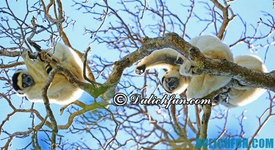 Hướng dẫn lịch trình vui chơi, ngắm cảnh, tham quan du lịch Madagascar: Du lịch Madagascar có gì thú vị? Khám phá các địa điểm tham quan, du lịch nổi tiếng ở Madagascar