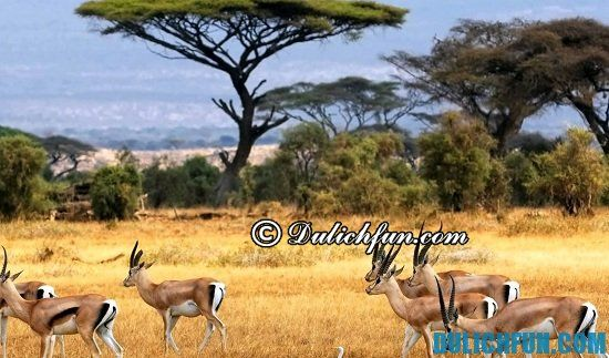 Chia sẻ kinh nghiệm du lịch Kenya tự túc. Hướng dẫn và kinh nghiệm du lịch Kenya đầy đủ, chi tiết