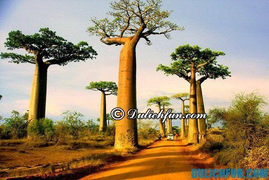 Nên du lịch Madagascar vào thời gian nào? Thời điểm nào nên đi du lịch Madagascar lý tưởng nhất