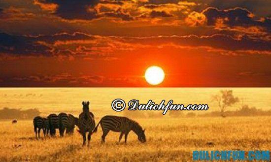 Nên du lịch Nam Phi vào thời gian nào? Thời điểm nên du lịch Nam Phi