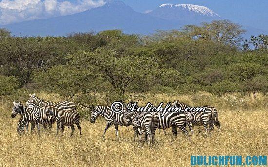 Du lịch Kenya mùa nào đẹp nhất? Thời điểm lý tưởng nên du lịch Kenya