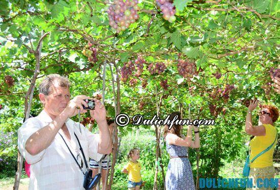 Du lịch Phan Rang Tháp Chàm có gì thú vị? Vườn nho Ba Mọi, địa điểm tham quan, du lịch đẹp, thú vị ở Phan Rang Tháp Chàm bạn không nên bỏ lỡ