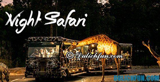 Chia sẻ kinh nghiệm du lịch Night Safari vui vẻ, thú vị. Hướng dẫn du lịch sở thú đêm Night Safari