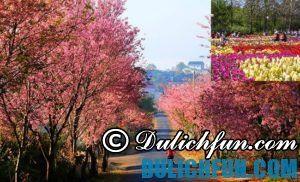 Du lịch Đà Lạt mùa nào đẹp? Xuân, hạ, thu, đông ở Đà Lạt