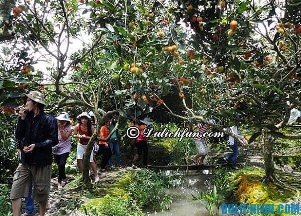 Kinh nghiệm đi khu du lịch Vinh Sang, Vĩnh Long giá rẻ, vui vẻ: Khu du lịch Vinh Sang có gì chơi?