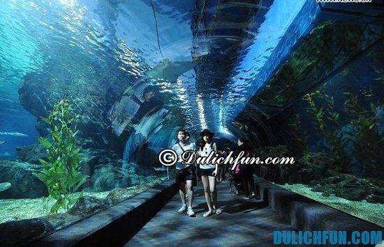 Những địa điểm tham quan, du lịch đẹp, hấp dẫn ở Bangkok. Thế giới thủy cung Siam Ocean World, địa điểm du lịch đẹp, ấn tượng ở Bangkok bạn nên tới