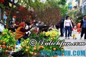 Những chợ hoa Tết nổi tiếng ở Hà Nội đón xuân ấm áp