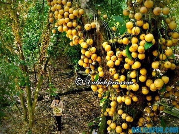 Kinh nghiệm đi vườn trái cây Lái Thiêu tự túc, giá rẻ