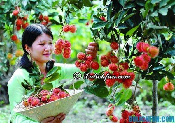 Đường đi tới vườn Lái Thiêu như thế nào? Hướng dẫn đi vui chơi, tham quan ở vườn trái cây Lái Thiêu và giá vé ăn hoa quả bao bụng