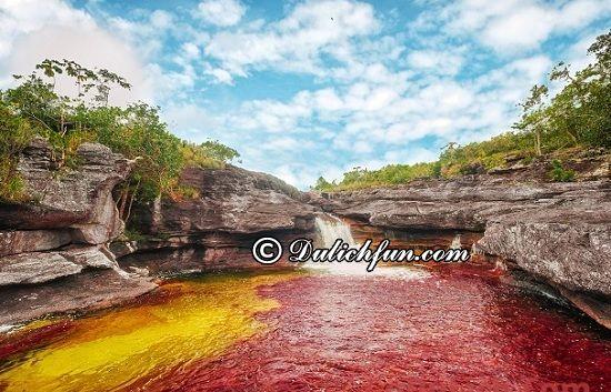 Du lịch Colombia có gì thú vị? Cano Cristales, địa điểm tham quan, du lịch đẹp ở Colombia không nên bỏ lỡ