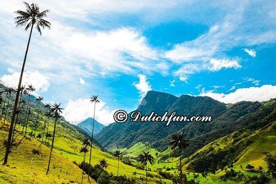 Đi đâu, chơi gì khi du lịch Colombia? Valle de Cocora, địa điểm tham quan, du lịch nổi tiếng nhất ở Colombia