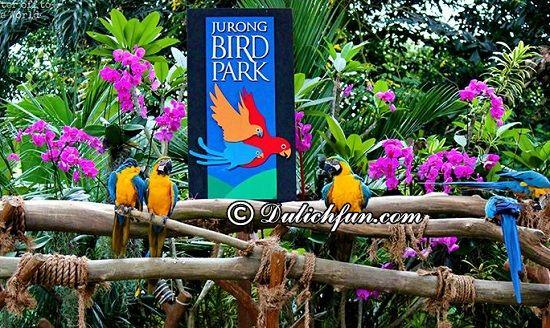 Chia sẻ kinh nghiệm du lịch vườn chim Jurong Bird Park vui vẻ. Hướng dẫn du lịch Jurong Bird Park tự túc, thuận lợi