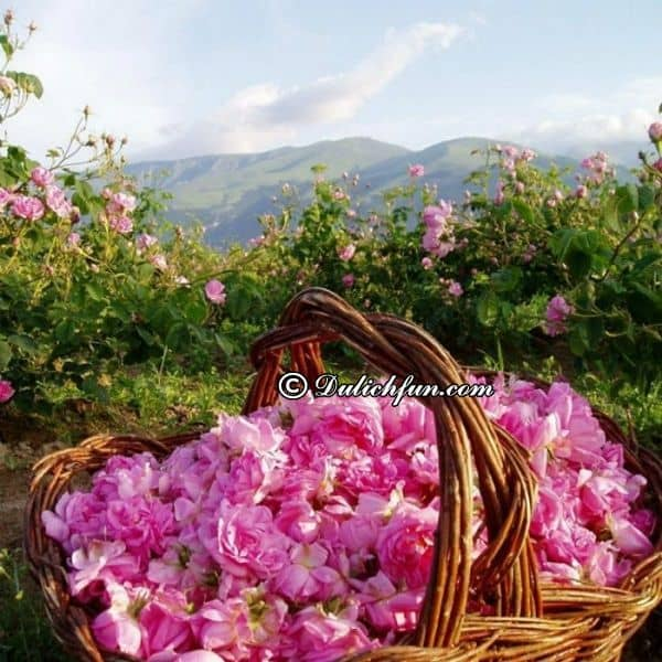 Kinh nghiệm du lịch Bulgaria đất nước triệu đóa hồng. Hướng dẫn, cẩm nang du lịch Bulgaria cụ thể, đường đi, ăn ở, cảnh đẹp