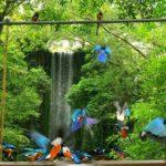 Du lịch vườn chim Jurong Bird Park có gì thú vị? Khám phá vẻ đẹp khu du lịch vườn chim Jurong Bird Park