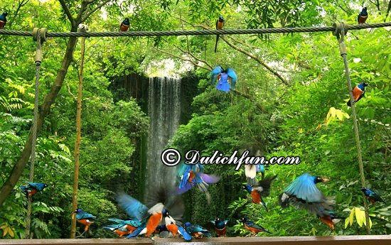Kinh nghiệm du lịch vườn chim Jurong, Singapore mới nhất
