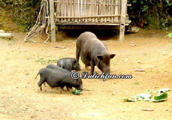 Ăn gì khi du lịch Na Hang? Thịt lợn đen, món ăn ngon, đặc sản nổi tiếng ở Na Hang