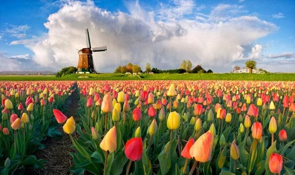 Kết quả hình ảnh cho Vườn Hoa Tulip Keukenhof