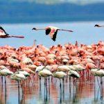 Kinh nghiệm du lịch Tanzania cái nhìn khác về châu Phi. Hướng dẫn, cẩm nang, phượt Tanzania đường đi, giá vé điểm tham quan, ăn ở.