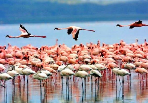 Nên đi đâu chơi khi du lịch Tanzania? Những địa điểm tham quan, vui chơi nổi tiếng nên tới khi đi du lịch Tanzania