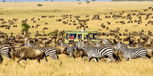 Kinh nghiệm du lịch châu Phi giá rẻ. Nên đi đâu chơi, tham quan, ăn uống khi đi du lịch Châu Phi?